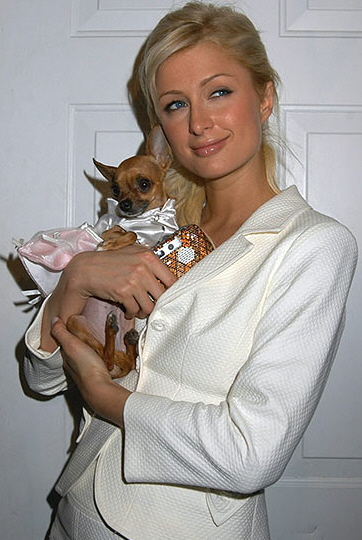 Paris Hilton and Her Chiauhauh