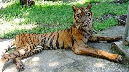 animals Surabaya Zoo