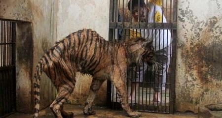 Surabaya animals